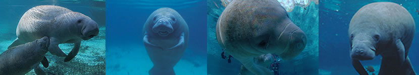 Manatees Scuba Diving Club